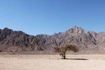 Baum in der Wüste